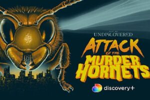 'Attack of the Murder Hornets' Documentary Coming to Discovery+ in the Spring