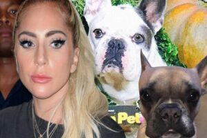 Lady Gaga's Dog Walker Was Shot And 2 Of Her Dogs Were Stolen