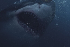 From the Producer of 'The Reef' Comes New Australian Shark Attack Movie 'Great White' [Trailer]