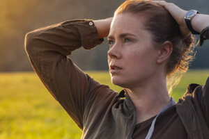 'Slash Film: 'Finding the Mother Tree': Amy Adams to Play Scientist Who Discovered How Trees Communicate'