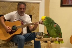 A Parrot Sings Led Zeppelin, Ted Nugent Makes More False Pro-Trump Claims, and Other Stories You May Have Missed This Week | MetalSucks