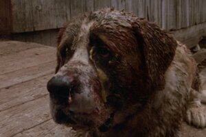 Adapting Stephen King's Cujo: Does The 1983 Classic Meet Its Full Horror Potential?