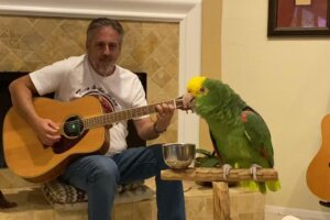 """This Parrot's Rendition of LED ZEPPELIN's """"Stairway to Heaven"""" Would Make Robert Plant Blush – Watch"""