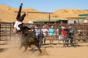 'Coming Soon: Jackass Forever Trailer Showcases Ridiculous Stunts'